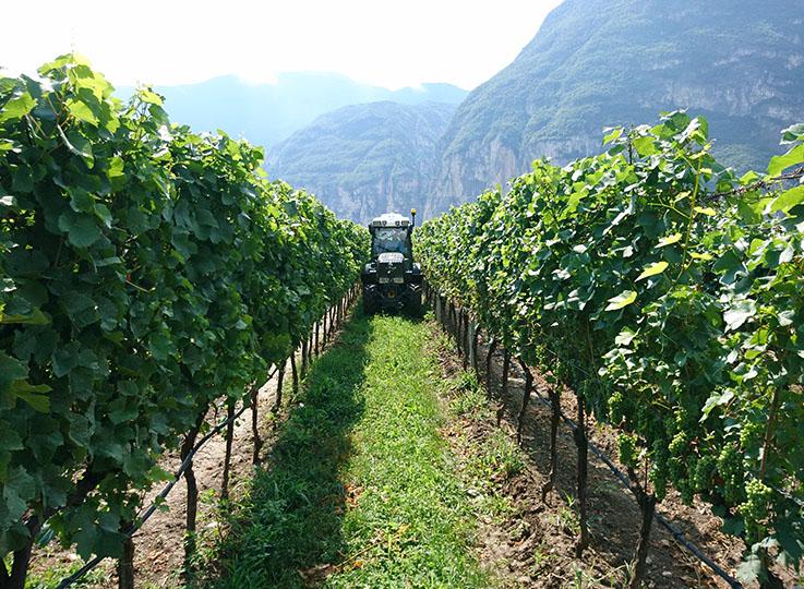 PSR Weinbau