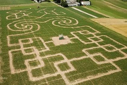 Maislabyrinth gesät mit Technik von Reichhardt