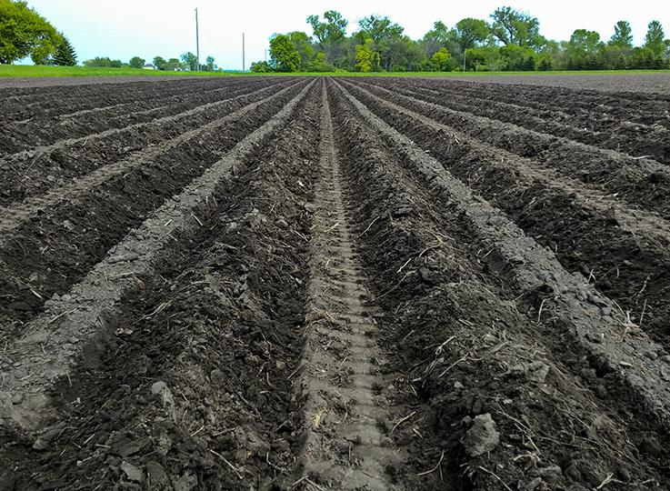 Planting potatos with high precision